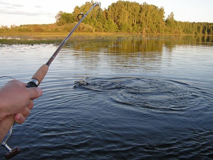 Эхолоты для рыбалки